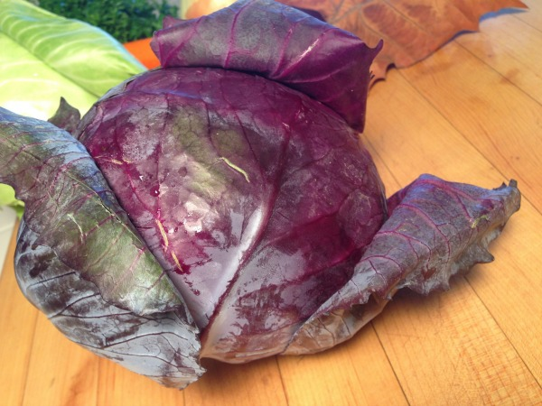 purple cabbage | Dianna Bonny Photography