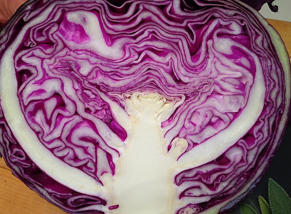 purple cabbage layers | Dianna Bonny Photography