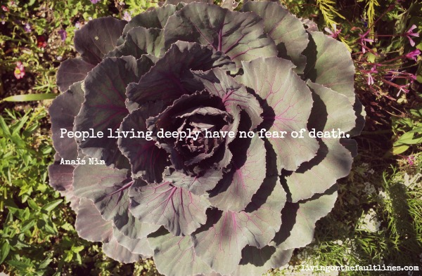 Anais Nin quote photo | Dianna Bonny Photography