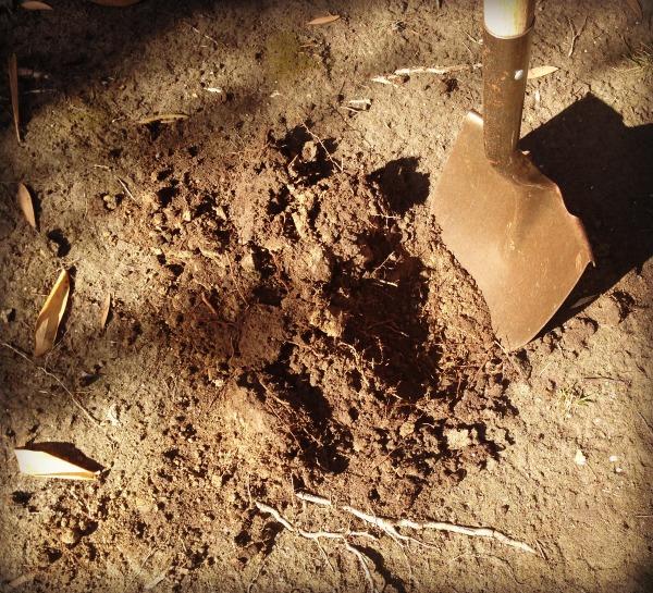 digging dirt | Dianna Bonny Photography